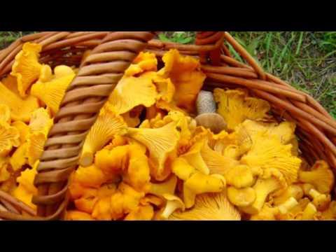 ГРИБЫ ЛИСИЧКИ - ПОЛЬЗА И ВРЕД | чем полезен гриб лисичка
