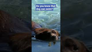 Must watch SWIMMING DOG #Shorts #dogs #pets