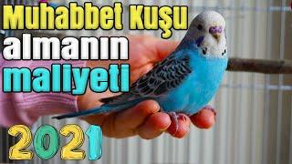Muhabbet kuşu almanın maliyeti 2021 Muhabbet Kuşu