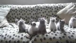 Кошки танцуют ШОК!