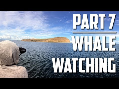 Out West - Part 7, Whale Watching