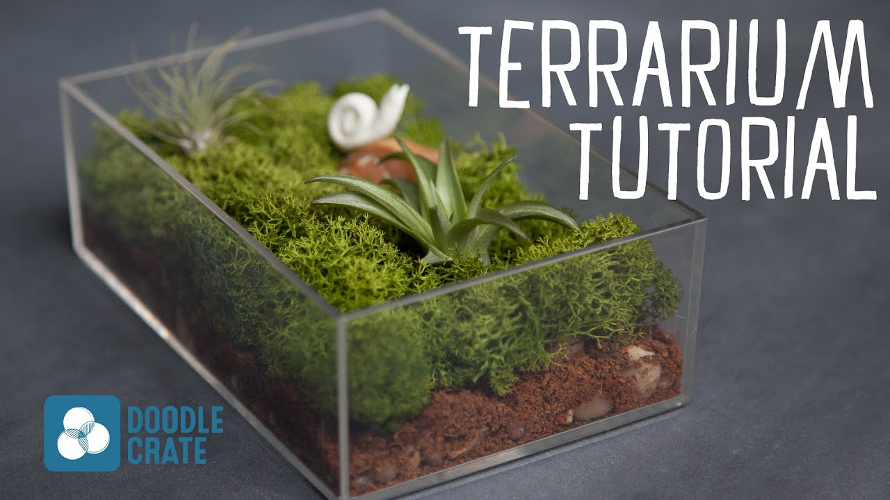 Air Plant Terrarium How To Create An Air Plant Terrarium Youtube