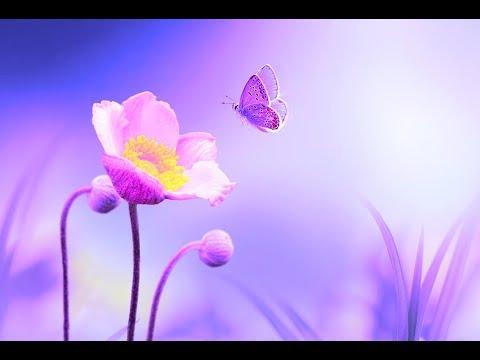 Positive Energy Cleanse 528Hz Music   Deep Healing Miracle Tone   Enhance Self Love   Calming Music