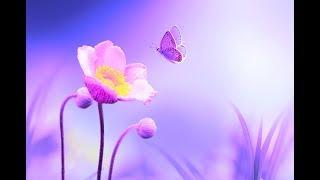Positive Energy Cleanse 528Hz Music | Deep Healing Miracle Tone | Enhance Self Love | Calming Music