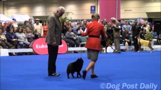 "Central Florida Kennel Club ""best In Show"""