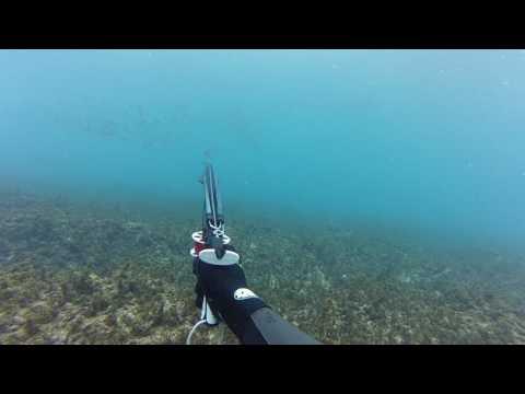 Chasse sous marine Martinique du 12/01/2017