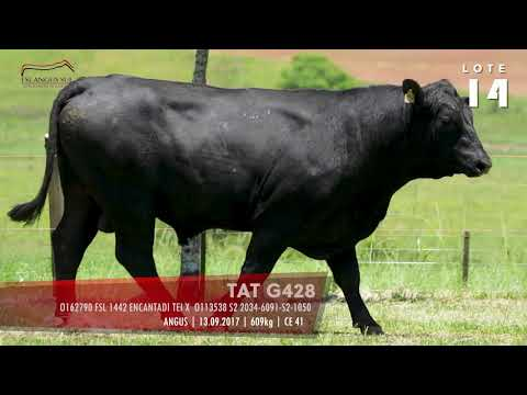 LOTE 14 - TAT G428
