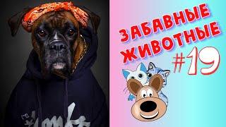 Приколы с Животными 19 Смешные Животные Приколы 2020 Приколы про Животных Лучшие Приколы