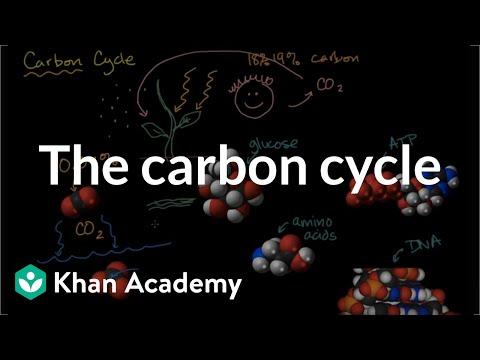 Carbon cycle  | Ecology | Khan Academy