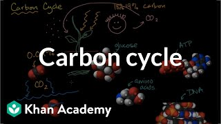 Carbon Cycle Ecology Khan Academy
