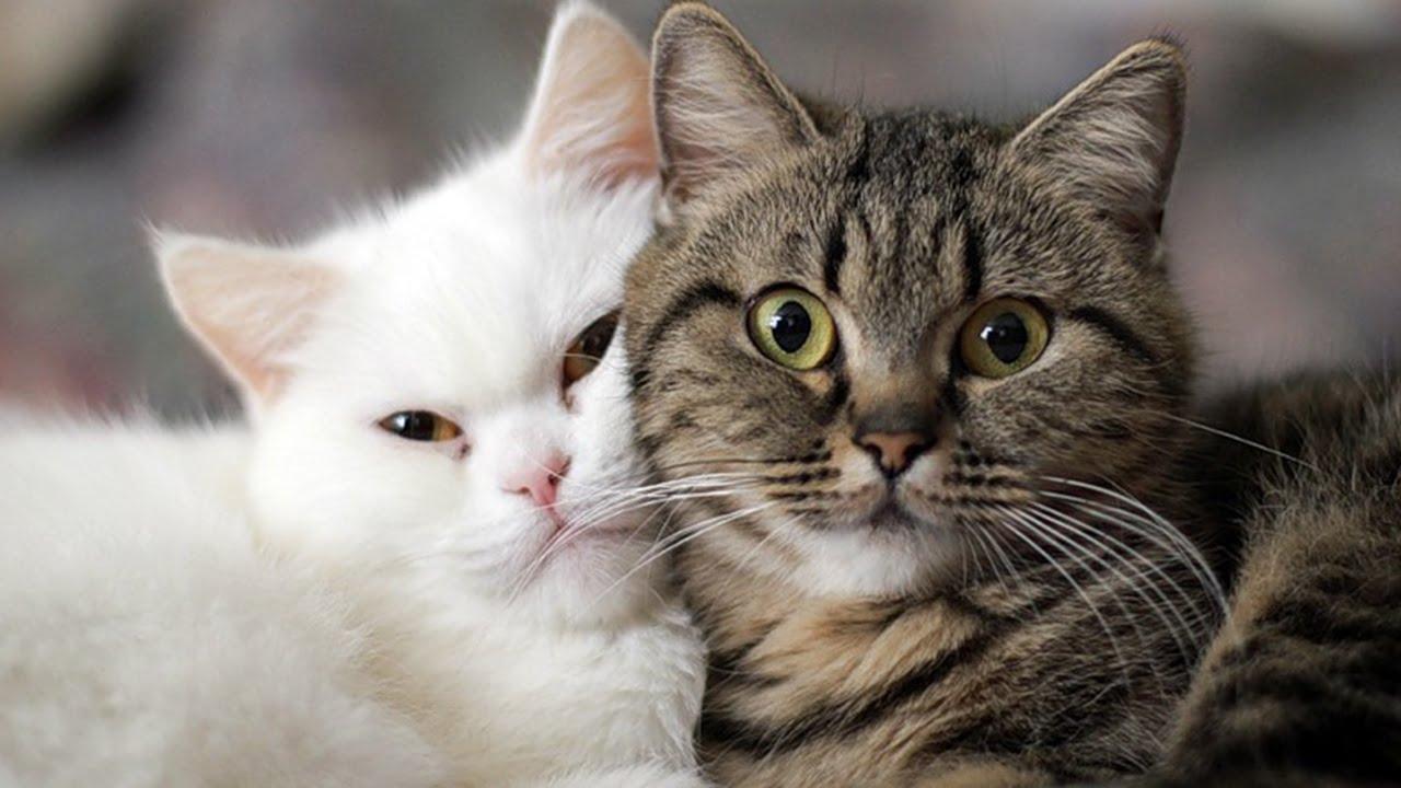 FUNNY VIDEOS Funny Cats Cute Cat Videos Cats Funny pilation