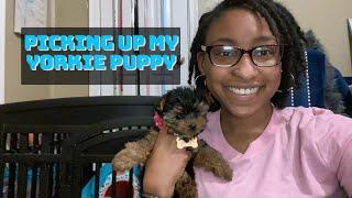 PICKING UP MY YORKIE PUPPY MARLEY || Vlog + First Night Storytime