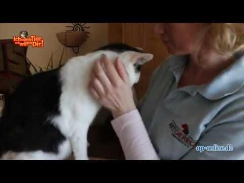 Janna - Folge 7 (Part 1/2) - Sebastian ist verschwunden von YouTube · Dauer:  14 Minuten 17 Sekunden