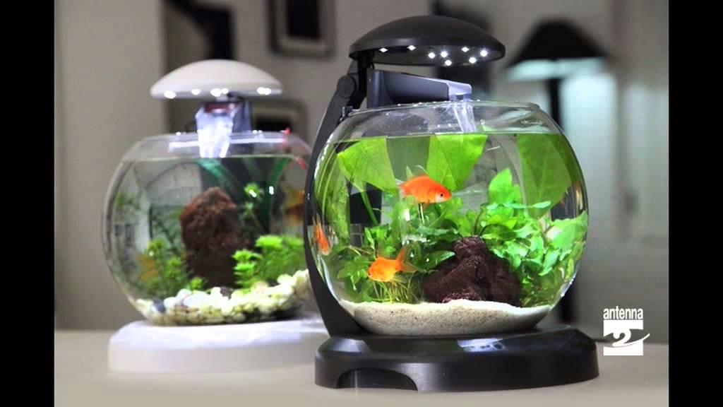 I segreti dei pesci rossi youtube for Vaschetta pesci rossi offerte