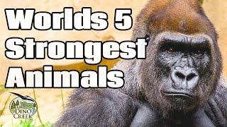 Worlds 5 Strongest Animals