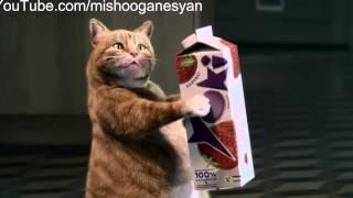 Кот в рекламе соков Yoki.(Подпишитесь на новые видео., 2013-05-03T09:57:59.000Z)