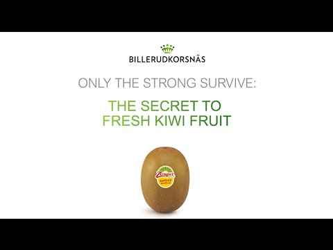 Only the strong survive. The secret to fresh kiwi fruit