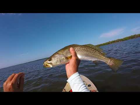 Fort Pierce Kayak Fishing Charters Spotted Sea Trout