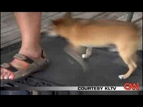 Dog Swallows Fishing Hook