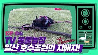 """EP 06""""TV 동물농장"""" 일산 호수공원의 지배자 요미"""