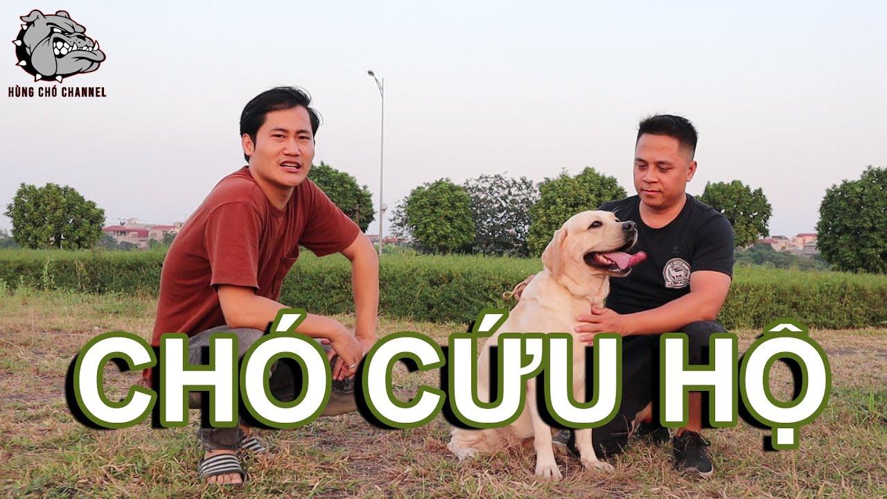 [DOG REVIEW] LABRADOR RETRIEVER-Giống chó cứu hộ/Hùng Chó Channel