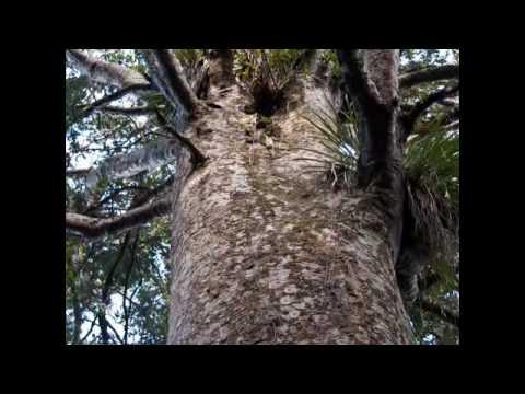 Puketi Forest, Northland Activities, New Zealand