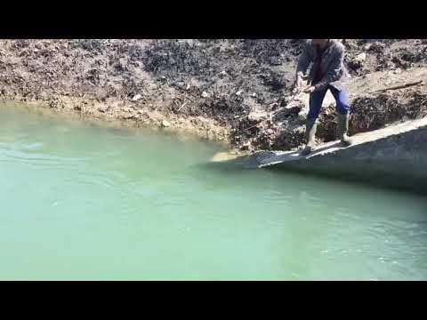 At Çek Mükemmel Bir Balık Avı