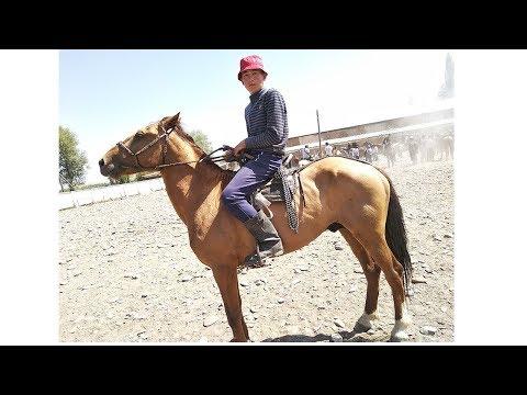 Озгон ат базары 🐎 Аттар, кулун, бээ, тай, байтал 30\\07\\18 Скотный рынок лошади