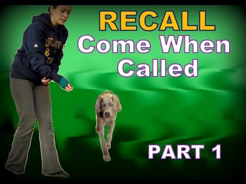 how to teach a dog recall