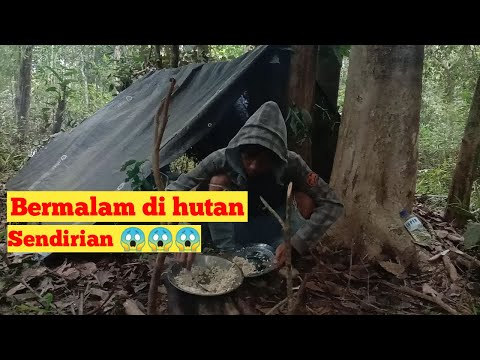 Bermalam Di Hutan Sendirian    Solo CAMPING   Solo OVERNIGHT    Bushcraft , Kalimantan Tengah