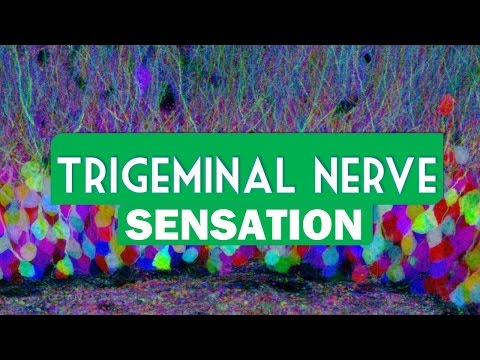 Endoscopic Microvascular Decompression for Trigeminal Neuralgia at Penn Medicine [Graphic content].