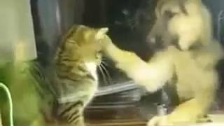 Кот даёт собаке сдачи