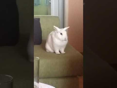 Sad bunny thinking about kill himself