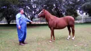 Rio - Quarter Horse Gelding for sale