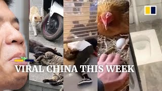 Viral China this week: 'cheating' cat takes social media by storm, and more