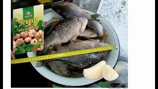 Рыбалка в области  Ловля карася видео
