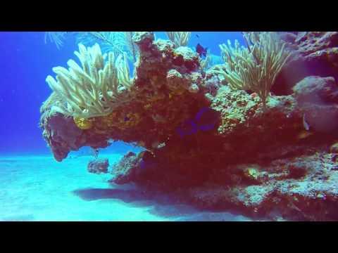 Saba Diving 2-14-17. Big Rock Market V2_64ft_50'_ Frank_Sea Saba_HD60fps8br