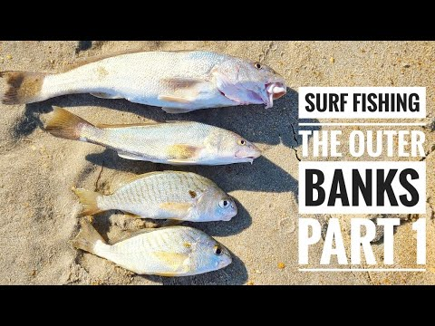 SURF FISHING The OUTER BANKS PART 1 -- A MULTI-SPECIES CATCH