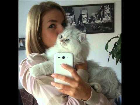 Bruno S One Year Chinchilla Persian Cat Youtube