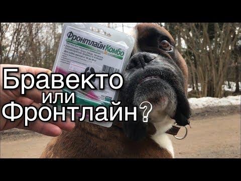 Бравекто или Фронтлайн/Средство от блох и клещей для собак