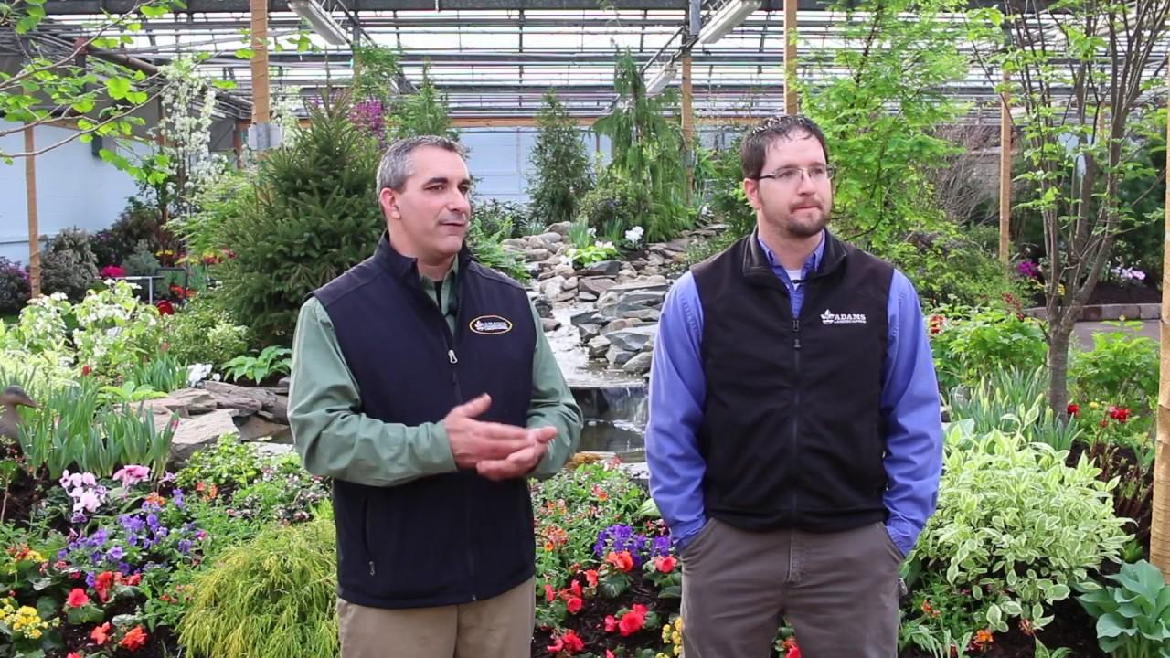 The Making Of An Adams Garden Show Doovi