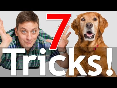 7 Dog Tricks in 5 Minutes! *NEW*