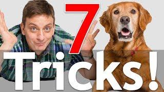 7 Dog Tricks in 5 Minutes!
