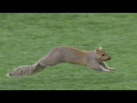 Animal Interference in Football