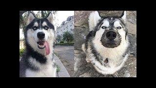 Khoảnh khắc hài hước động vật dễ thương | Funny animals compilation try not to laugh | Pet Family
