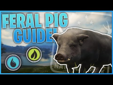 Feral Pig Guide! | theHunter: Call Of The Wild