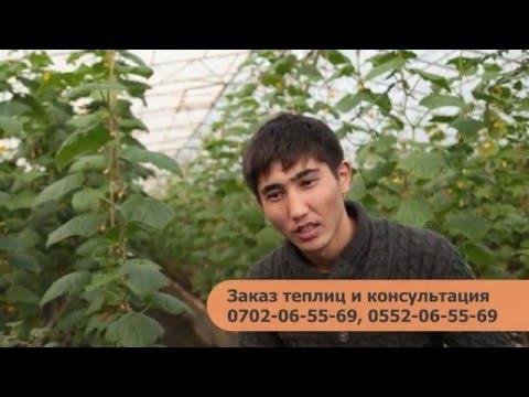 Строительство теплиц в Кыргызстане