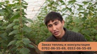 видео: Строительство теплиц в Кыргызстане