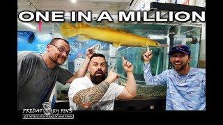 monster-fish-catch-1-in-a-million-golden-gar