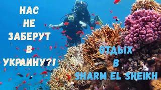 Gambar cover НОВЫЙ ОТЕЛЬ 2020!!! Albatros Palace Sharm el Sheikh (2 / 3 часть) / Отдых Зимой в Египте
